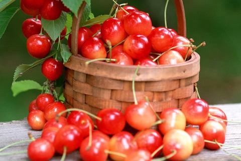 Cherry đang khan hàng trên thị trường Ảnh: ST