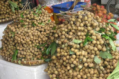 Nhãn lồng Hưng Yên chưa vào chính vụ nên chưa thể bán tràn lan trên thị trường Ảnh minh họa: Phạm Thủy