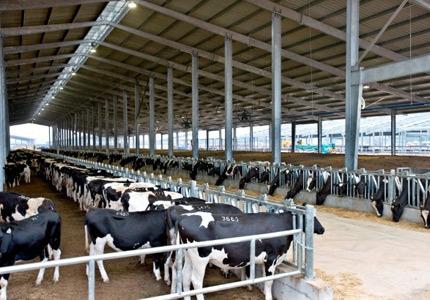 Trang trại của Công ty cổ phần Thực phẩm Sữa TH.