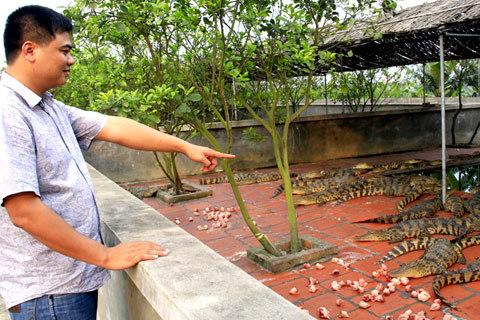 31 tuổi, Nguyễn Quang Hiển là chủ của hai trang trại cá sấu giá bạc tỷ. Ảnh: Tuệ Minh