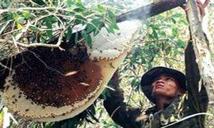 Vực dậy thương hiệu mật ong U Minh