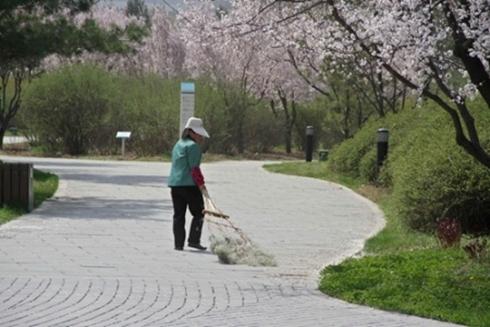 Công việc hàng ngày của bà Yu là dọn vệ sinh đường phố. Ảnh: LAFM