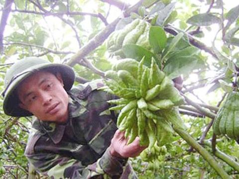 Anh Thưởng đang khoe những quả phật thủ đẹp trong vườn nhà. Ảnh: Dân Việt