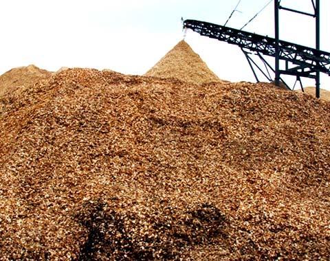 Sản phẩm dăm gỗ ùn ứ cao như núi ở các nhà máy tại Khu kinh tế Dung Quất. Ảnh: Trí Tín.