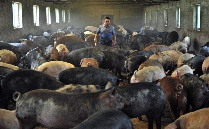 Quá tải ở các nông trang khổng lồ Trung Quốc