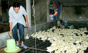 Chủ trang trại làm giàu từ 2 triệu đồng