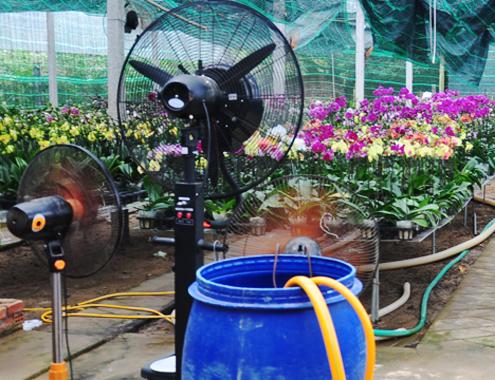 4-1-Anh-3-Phong-lan-7600-1388885977.jpg
