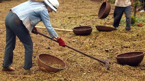 coffee-1154-1390100219.jpg