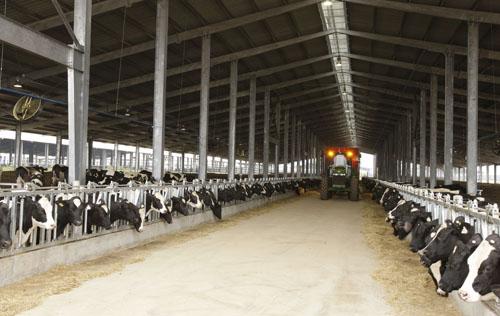 Dự án Chăn nuôi bò sữa và chế biến sữa tập trung quy mô công nghiệp của Tập đoàn TH được triển khai tại Nghĩa Đàn, Nghệ An
