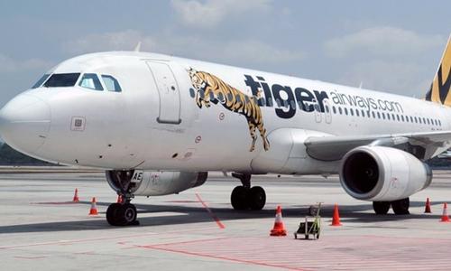 tiger-3787-1413536567.jpg