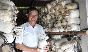 Lãi tiền triệu mỗi ngày nhờ trồng nấm