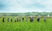 Nông nghiệp Việt Nam trước ngưỡng cửa TPP