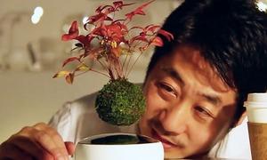 Kiếm bộn tiền với bonsai biết... bay