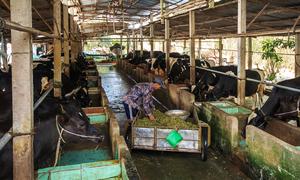 Có 300 triệu nên chăn nuôi, đầu tư đất hay thi công xây dựng