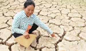 Việt Nam mất 15.000 tỷ đồng vì hạn hán, xâm ngập mặn lịch sử