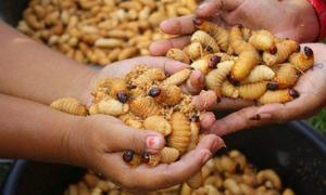 Mua bán đuông dừa tràn lan trên mạng