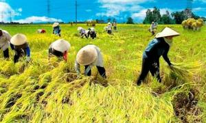 HSBC: Nông nghiệp khó khăn tác động xấu đến GDP Việt Nam