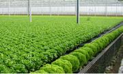Hai tỷ đồng có nên đầu tư vào rau sạch?