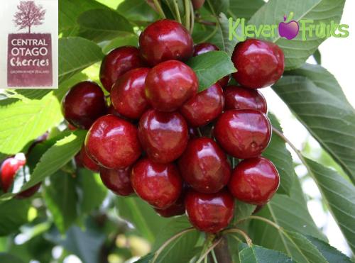 chon-cherry-new-zealand-lam-qua-tang-tet-dinh-dau