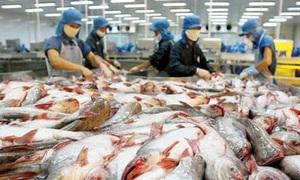 'Vua cá tra' hụt hàng trăm tỷ đồng lợi nhuận sau kiểm toán