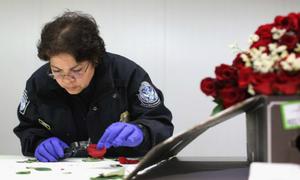 Mỹ kiểm tra gắt gao hoa nhập mùa Valentine