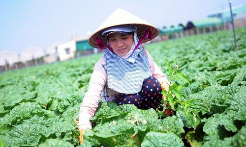 Vingroup hợp tác với 500 hộ sản xuất cung ứng nông sản sạch