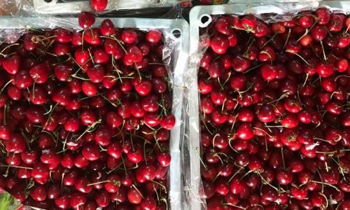 cherry-trung-quoc-gia-re-chiem-linh-cho-online