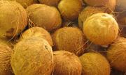 Giá dừa khô Bến Tre lập đỉnh trong vòng 7 năm
