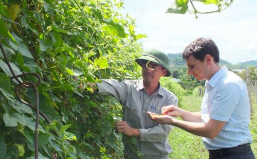 Vườn dược liệu mời chuyên gia nước ngoài sang tư vấn và kiểm tra chất lượng.