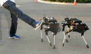 Chó robot Trung Quốc giá 30.000 USD mỗi con