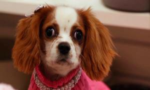 Cửa hiệu chăm sóc chó xa xỉ nhất nước Mỹ
