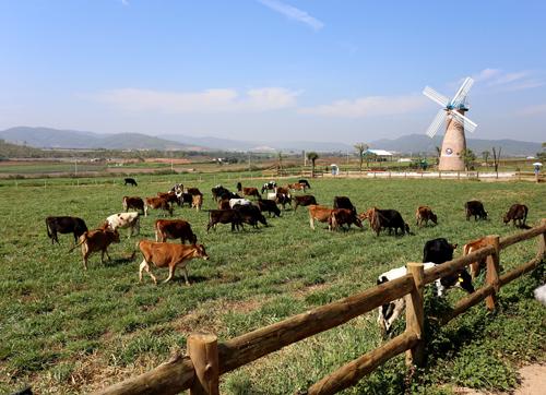 Trang trại Organic tại Lâm Đồng, Đà Lạt  trang trại Organic đầu tiên đạt tiêu chuẩn châu Âu tại Việt Nam.