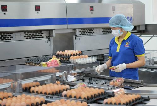 Một quy trình kiểm định trứng gà của doanh nghiệp.