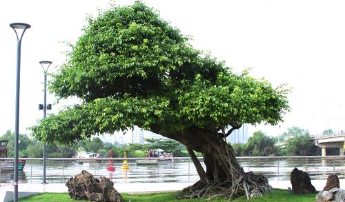 Căn hộ phong cách resort trong dự án tỷ USD ở Nam Sài Gòn