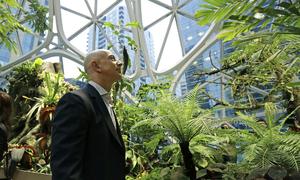 Amazon xây rừng mưa nhân tạo 4 tỷ USD tại trụ sở làm việc