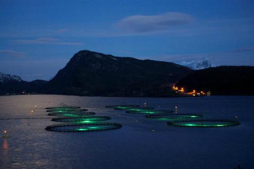 Một trang trại nuôi cá tại Na Uy. Ảnh: Björgólfur Hávarðsson.