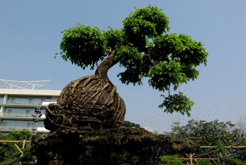 Bộ sưu tập của nghệ nhân Huỳnh Văn Huy (Bến Tre)gồm khoảng 20 cây, kích thước to lớn, dáng câyđộclạ.Cây sanh ôm lu cũng là một tác phẩm độc nhấttrong bộ sưu tập của anh Huy.