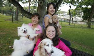 Chi phí nuôi chó đắt đỏ ở Singapore