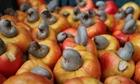 Giá hạt điều tăng vọt trong dịp Tết