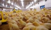 'Vua thép' Hòa Phát sắp đi bán trứng