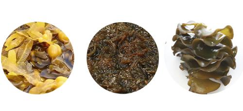 Từ trái sang phải: Fucus Fucoidan, Mozuku Fucoidan và Mekabu Fucoidan.