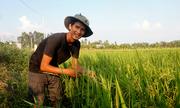 Hành trình làm ra hạt gạo sạch của ông chủ 9x