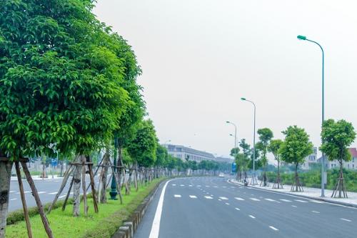 Hàng nghìn cây xanh được ươm trồng, rợp mát tuyến phố nội khu Anland.