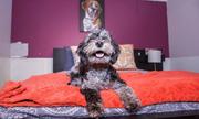 5 khách sạn xa hoa nhất cho chó tại Mỹ