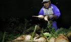 'Trước khi được giải cứu, người trồng củ cải đã lãi cao'