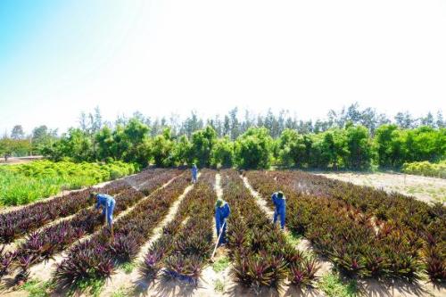 Người nông dân cố gắng làm giàu trên chính mảnh đất quê hương.