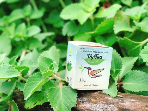 Giảm cân cùng trà thảo dược của Havyco