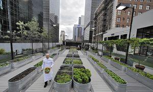 Big Data - Lời giải cho bài toán xây nông trại trong lòng thành phố