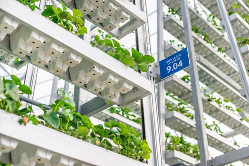 Bên canh đó, việc tuần hoàn tròn còn giúp cho từng cây trồng nhận được đủ lượng ánh sáng cần thiết.