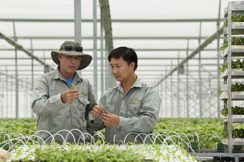 Các chuyên gia nông nghiệp hàng đầu trong nước và nước ngoài tại vườn rau thủy canh của Vineco.